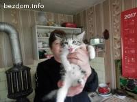подарявам две женски котета