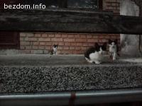 Котета се подаряват