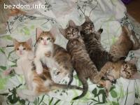 Пет котета - госпожици си търсят постоянен дом