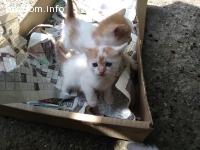 Подарявам малки, красиви котета