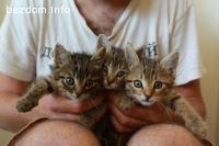 Три котета си търсят дом