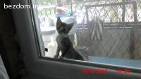 шест котета си търсят стопанин