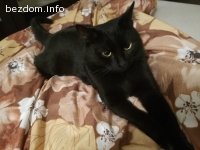 Търся дом за прекрасните ми котки