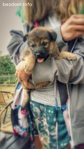 Женско кученце търси дом