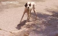 Дружелюбно ловджийско куче търси дом⯑