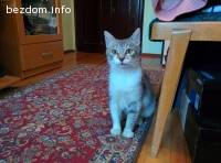 Маца - женско коте търси дом, СОФИЯ