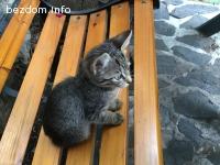 Подарявам котенца на два месеца, мъжко и женско
