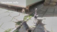 Котенца си търсят дом