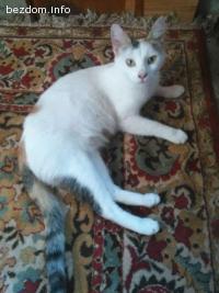 Изчезнала котка Белла