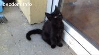 Търся дом на котета и майка им