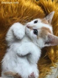 Спешно подарявам котета!