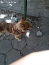 Изгубено куче търси стопаните си