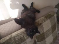 Изгубена котка !!!
