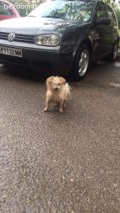 Забелязано изгубено куче