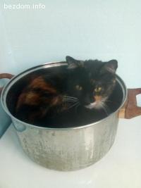 Изгубена котка Томи