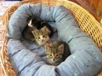 Три котета от добро семейство