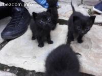 Подарявам черно коте / котета