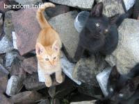 Подарявам котета