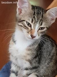 СПЕШНО Подарявам котета!!!
