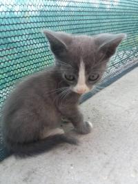Котета си търсят нов дом