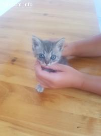 Подарявям коте