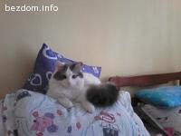 Изгубена котка