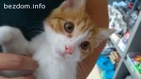Женско котенце на два месеца