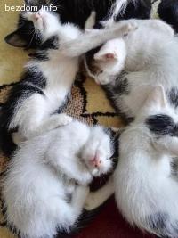 Подаряваме котенца