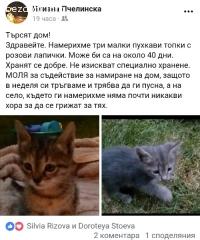 Коте подарявам
