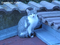 Здраво, игриво и гальовно котенце от сой търси нов дом