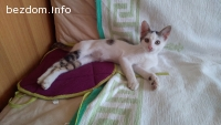 Търсим дом за Бети – може би най-гальовното коте в България
