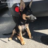 Намерено кученце