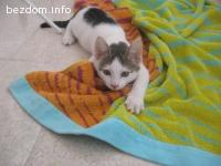 Много мило и любвеобилно котенце търси дом