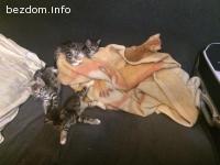 Домашни котенца търсят дом