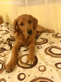 Красиво женско куче търси дом