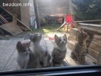 Котенца търсят любящ дом :)
