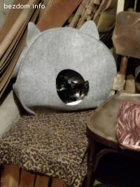 Котета в мазето