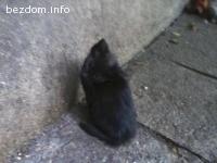 Предлагаме котенца за осиновяване