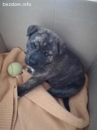 Подарявам куче