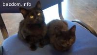 Котета спешно търсят дом!