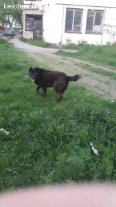 Изгубено черно куче на име Хъч