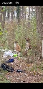 Три бездомни малки кученца