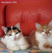 Подарявам две женски кастрирани котета