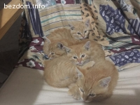 Малки котета-сладури, подаряват се