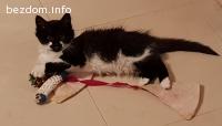 Котето Мелиса си търси уютен дом и любящи стопанин
