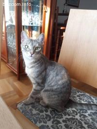 Намерена женска котка