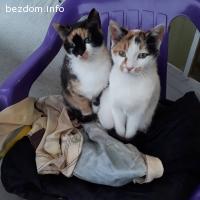 Две сестрички търсят дом