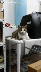 Коте търси дом