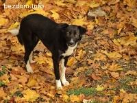 изгубено куче Сара