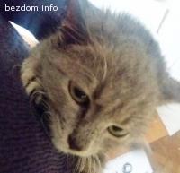 Коте с нужда от помощ
